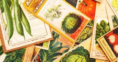 Collectionneurs – Sachets de graines